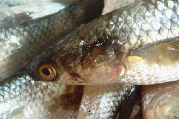 ловля рыбы в реке запреты